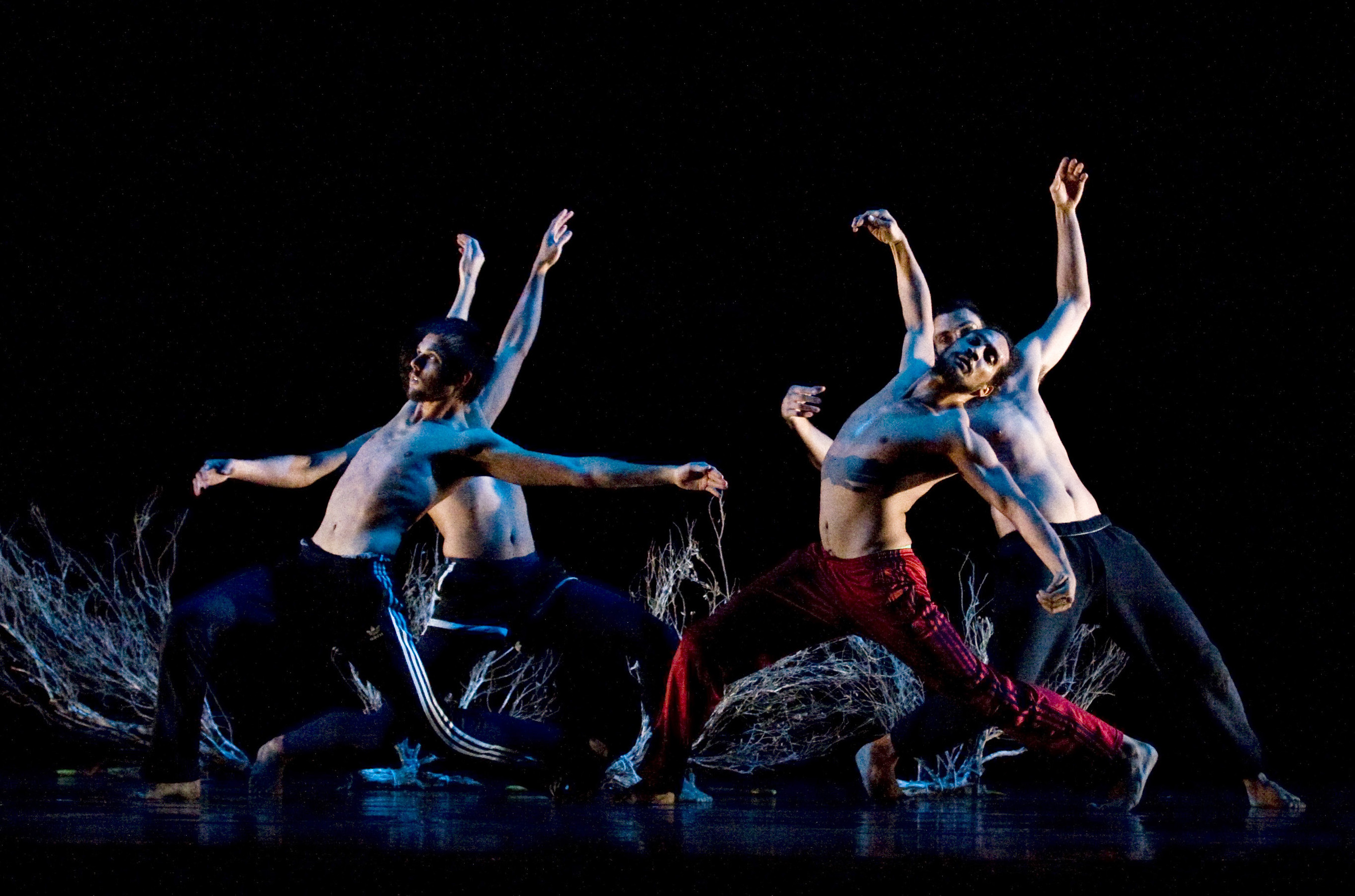 dance theatre We use dance and music to nourish the mind and the soul join us what's next   2018 by cerqua rivera dance theatre proudly created with wixcom.