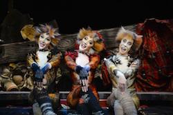 'Cats' Australian Tour