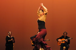Studio Flamenco.